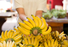 Hand holding yellow bananas Stock Image