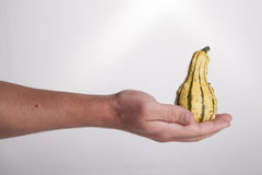 Hand Holding Yellow Gourd Stock Image