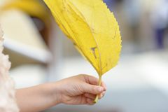 Hand holding yellow leaf stock images