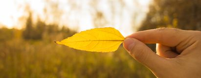 Hand holds yellow leaf on autumn field and sky background. Autumn composition in forest. Hand holding yellow leaf on field background. Autumn time season royalty free stock photography