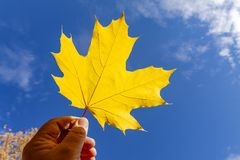 A hand is holding a yellow maple leaf against the background of the autumn sky.  stock photos