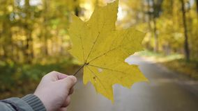Hand holding yellow maple leaf on autumn yellow sunny background.  stock video footage