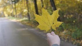 Hand holding yellow maple leaf on autumn yellow sunny background.  stock footage