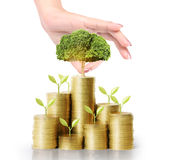 Hand holding young green plant and coins money Royalty Free Stock Images