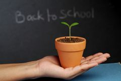 Hand holding young plant. Hand holding a young plant against black board Royalty Free Stock Photos