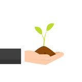 Hand holding young plant. Hand holding seeding in dirt. Vector illustration isolated on white background Royalty Free Stock Image