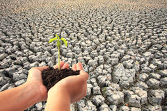 Hand holding young plant with soil on Cracked earth texture back Stock Photo