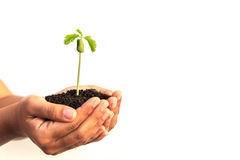 Hand holding young plant with soil on Cracked earth texture back Royalty Free Stock Photo