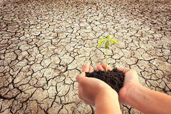 Hand holding young plant with soil on Cracked earth texture back Royalty Free Stock Photos