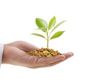 Hand holding a young tree growing on coins. Man hand holding a tree growing on coins Stock Images