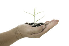Hand holding a young tree growing on coins on white background Stock Photography