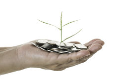 Hand holding a young tree growing on coins on white background Royalty Free Stock Images