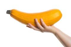 Hand holding zucchini Stock Image