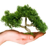 Hand holdinggreen tree Stock Image