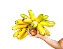 Hand holds banana.  Isolated on a white background. Stock Photos