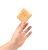 Hand holds biscuit. Stock Photos
