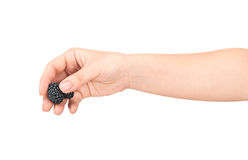 The hand holds the blackberries Royalty Free Stock Photo