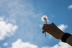 Hand holds blowball flower up into the sky Stock Photography