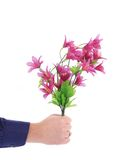 Hand holds bouquet of flowers. Stock Photo