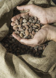 Hand holds cocoa beans Stock Photography
