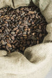 Hand holds cocoa beans Stock Photos