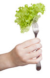 Hand holds fork with impaled fresh leaf lettuce Royalty Free Stock Photos