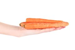 Hand holds fresh carrots. Stock Images