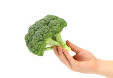 Hand holds fresh healthy brocoli. Royalty Free Stock Photo