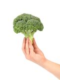 Hand holds fresh healthy brocoli. Stock Image