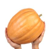 Hand holds fresh orange pumpkin Stock Photos