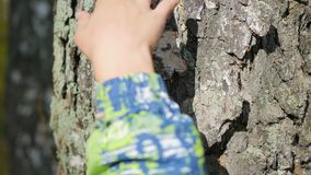 Hand holds hand on the tree closeup stock footage