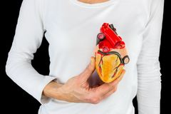 Hand holds human heart model above chest. Female hand holds human heart model in front of white body at black background royalty free stock photos