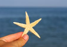Hand that holds the just collection Starfish in the depths of th Stock Photo