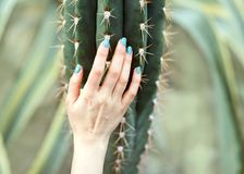 The hand holds a large cactus, beauty concept. Art Contemporary stock images