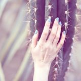 The hand holds a large cactus, beauty concept. Art Contemporary.  royalty free stock photo