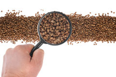 The hand holds a magnifying glass over the buckwheat Stock Photography