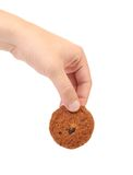 Hand holds oatmeal raisin cookie. Royalty Free Stock Images