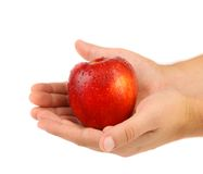 Hand holds red wet apple Royalty Free Stock Image