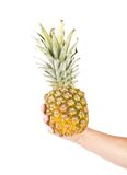 Hand holds of the ripe pineapple. Royalty Free Stock Photos
