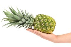 Hand holds of the ripe pineapple. Stock Images