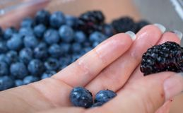 Blue forest fruits. stock image
