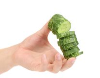 Hand holds stack juicy cucumber. Stock Images