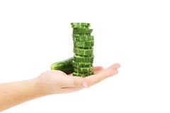 Hand holds stack juicy cucumber Royalty Free Stock Photography