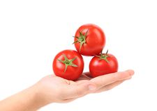 Hand holds three red ripe tomatoes Royalty Free Stock Image