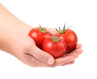Hand holds three red ripe tomatoes Stock Image