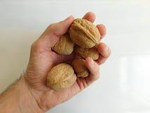 Hand holds walnut Royalty Free Stock Photos
