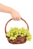 Hand holds white grapes in basket. Stock Photos
