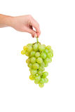 Hand holds white grapes. Royalty Free Stock Images