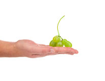 Hand holds white grapes. Stock Photos