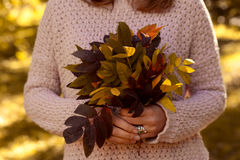 Hand holds yellow autumn leaves Stock Photography